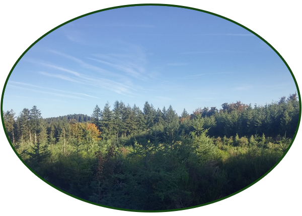 La forêt du Catié