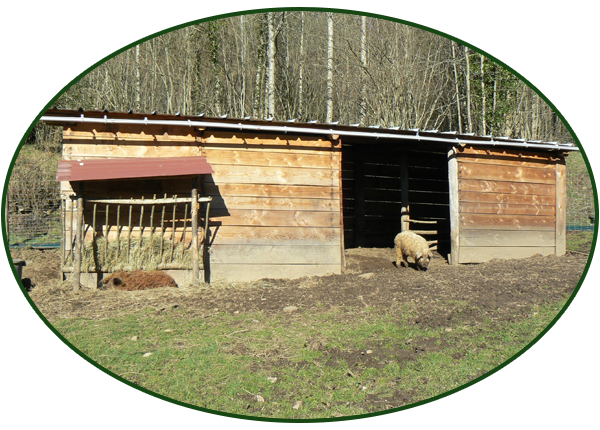 Un élevage de cochons hors norme